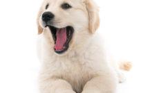 Lire la suite: Comment bien brosser son chien ?