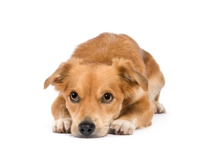 Age du chien