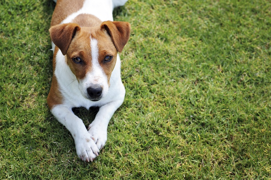 Lire la suite: Pourquoi mon chien se gratte ?