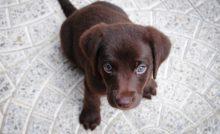 Lire la suite: Comment faire pour que mon chien n'ait pas peur de l'orage et/ou des feux d'artifice ?
