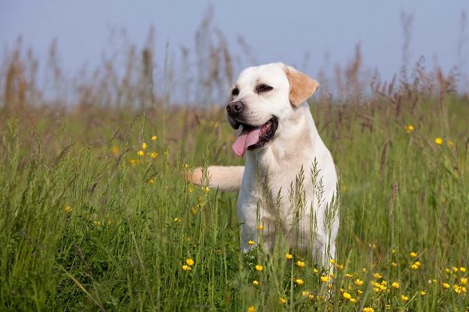 Lire la suite: Mon chien s'est fait mordre par une vipère