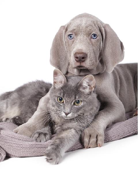 Lire la suite: Comment savoir si mon chien ou mon chat a des vers ?