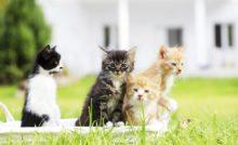 Lire la suite: Ma chatte a eu des chatons, que faire pour les donner ?