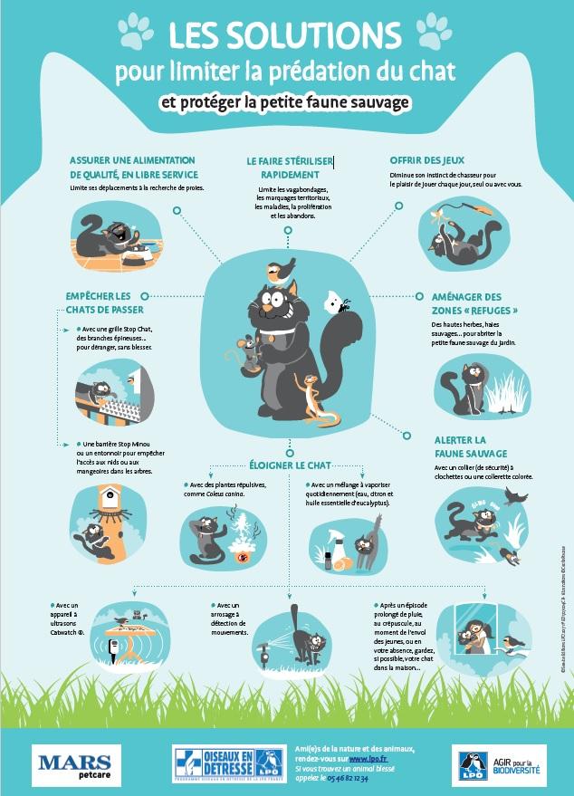 Comment protéger la petite faune sauvage des chats?