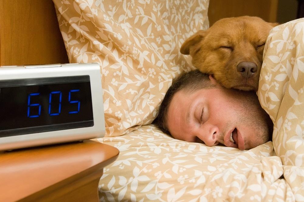 Reprendre le rythme de la rentrée avec votre animal