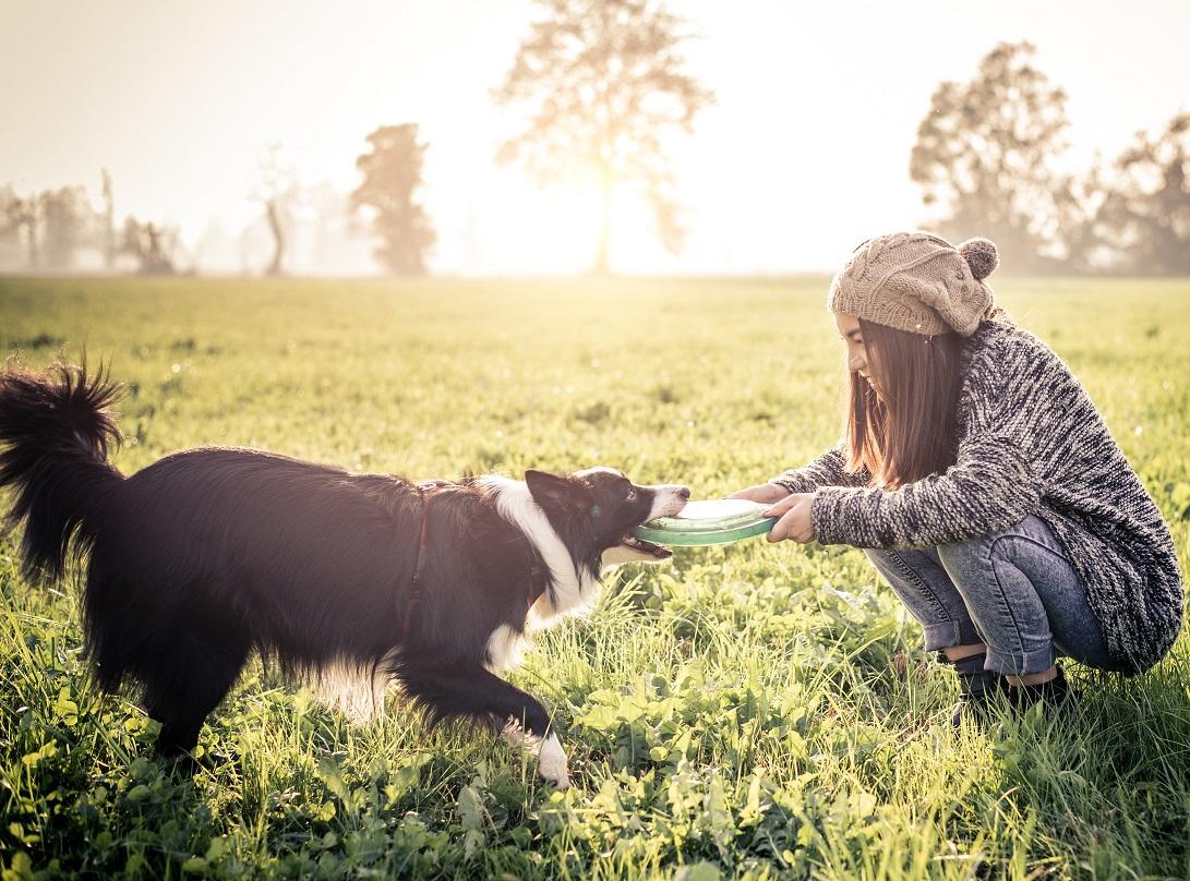 Adolescence et comportement chez le chien.
