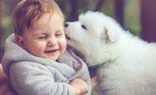 Les bienfaits des animaux de compagnie