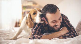Salive des chiens et des chats : risques et bactérie