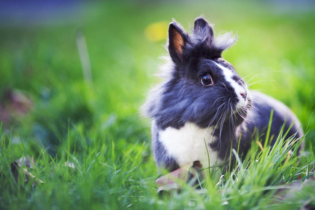 Les parasites internes des rongeurs et lapins