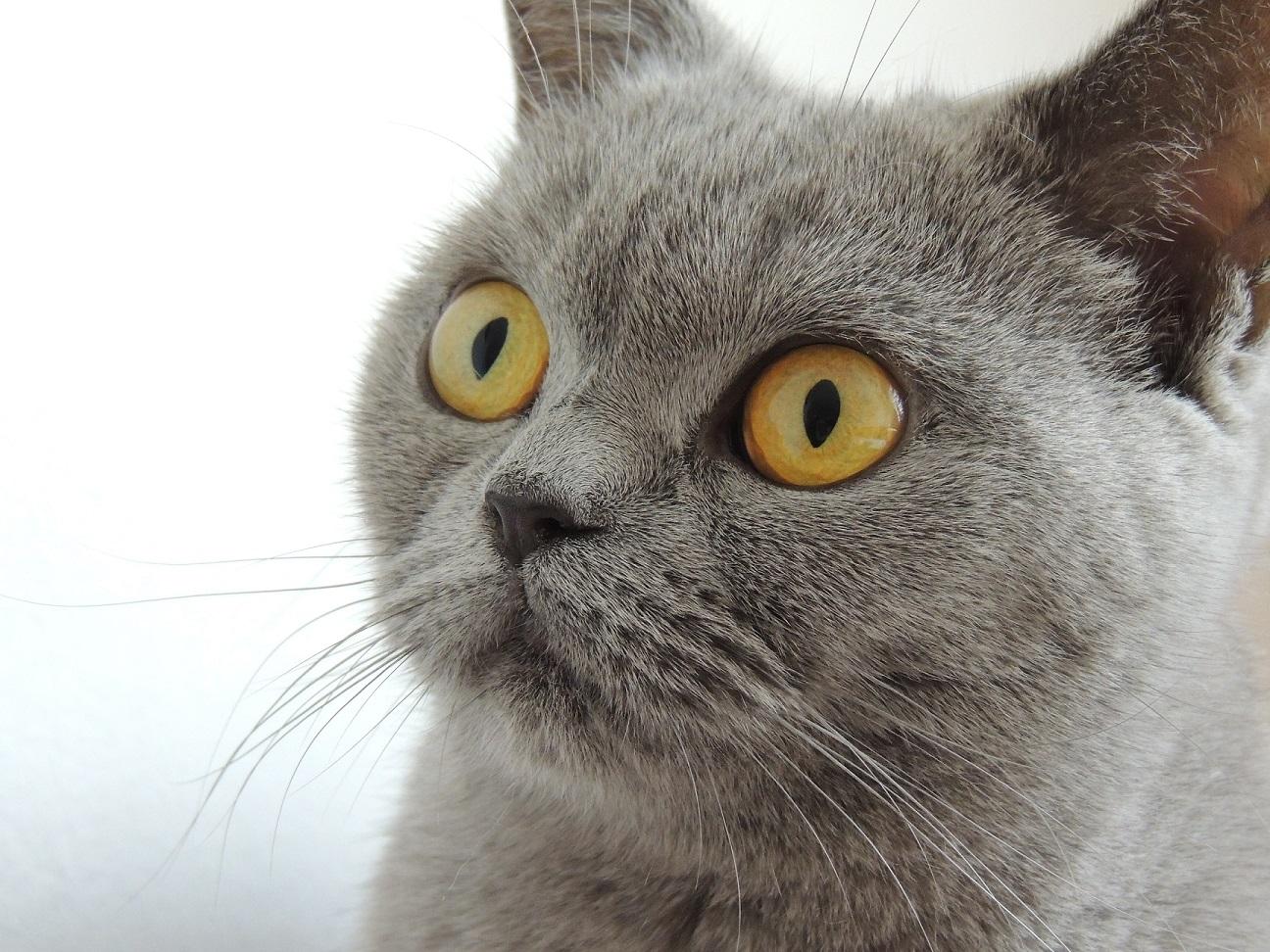 Comment voient les animaux ?