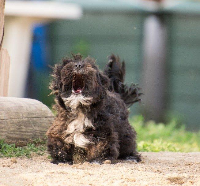 collier pour chien contre aboiement
