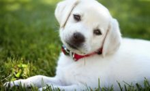Peut-on donner du paracétamol à son chien ?