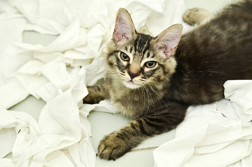 Lire la suite: Mon chat se venge