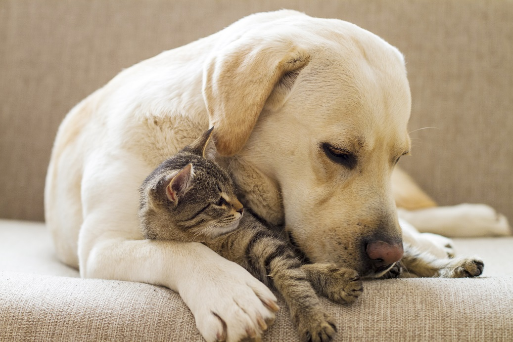 Les croquettes pour chien sont-elles bonnes pour les chats ?