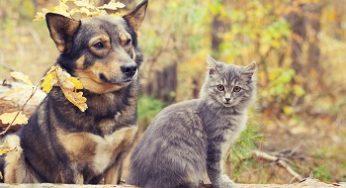Les effets indésirables des vaccins pour chien et chat