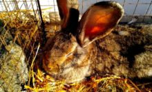 Lire la suite: Comment bien accueillir un lapin chez soi ?