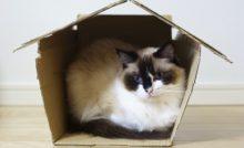 Lire la suite: Donner son chat