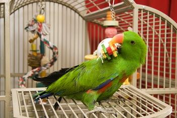Les aliments toxiques pour les oiseaux