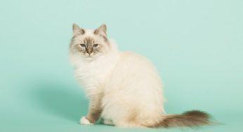 Peut-on donner du lait aux chats ?