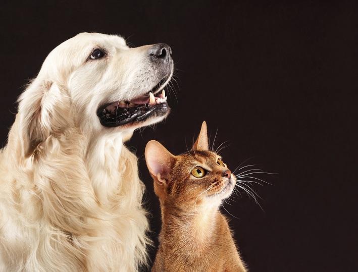Lire la suite: Comment gérer les régimes de plusieurs animaux ?