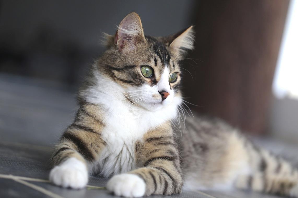 Les signes de vieillissement chez le chat