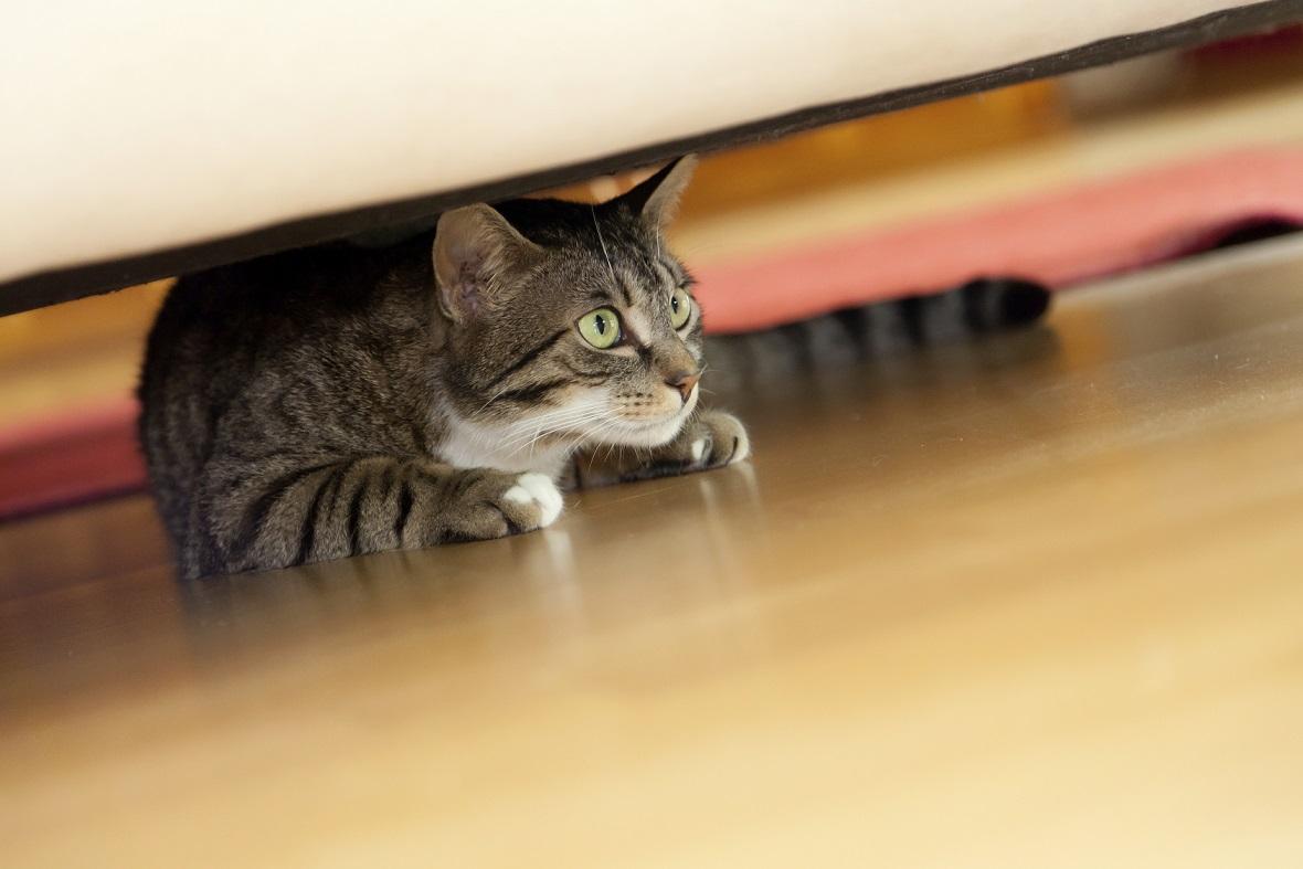 Mon chat a peur du bruit
