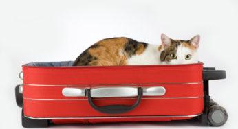 Lire la suite: Prendre l'avion avec son animal