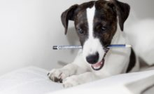 Lire la suite: Punition chez le chien : bonne ou mauvaise idée ?