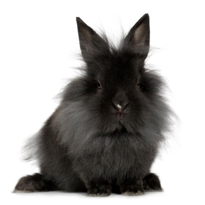 Lire la suite: La mue chez le lapin