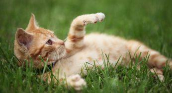 Comment habituer un chat à aller dehors ?