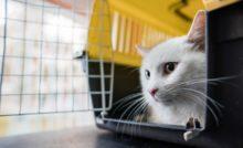 Comment mettre un chat dans une cage ?