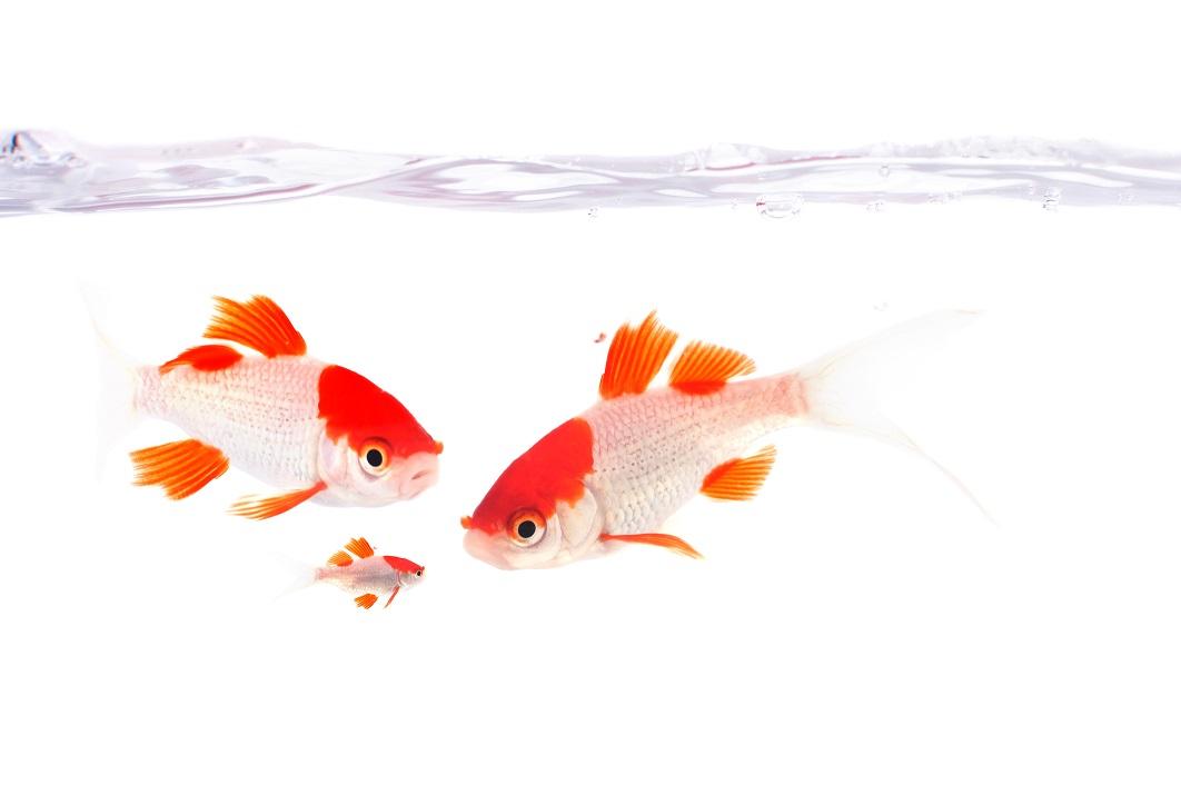 Que faire de vos poissons pendant les vacances ?