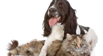 Lire la suite: Mon animal a de l'arthrose, que faire ?