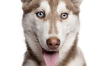 Comment savoir si son chien est sourd ?