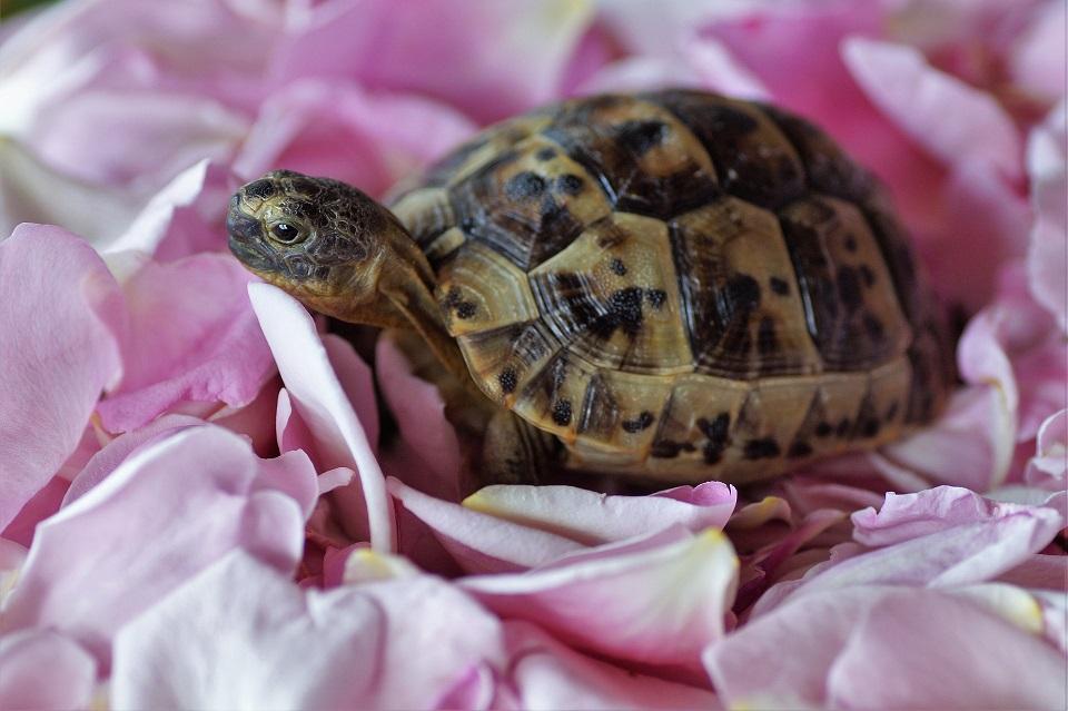 Ma tortue a la carapace cassée, que faire ?